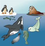 North sea animals. Vector graphic image with diffrent north sea animals Royalty Free Stock Image