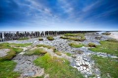 North sea bottom at low tide Royalty Free Stock Image