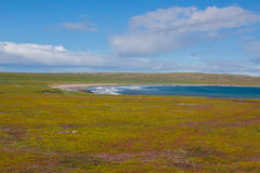 North Sea Coast, sunny weather. North Sea Coast, Russia, summer at north Stock Images