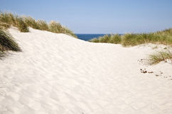 North Sea Dunes in Denmark Stock Photography