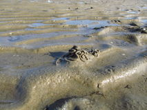The North Sea mud with lugworm heaps Royalty Free Stock Image