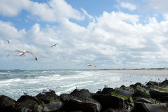 North sea. Overlooking North sea from pier of Hoek van Holand, birds in sky royalty free stock image