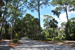 North Sea Pines Drive, Hilton Head Island tropical nature. Sea Pines resort, HHI, South Carolina. One of the most beautiful islands ever, green and blue and stock photo