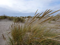 By the North Sea. In the sanddunes at `Vorupør` in Denmark - August 2016 Royalty Free Stock Image