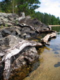 North shore rocks. Granite and driftwood along a beach in Northern Minnesota Stock Photos