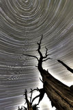 North Star Dead Tree HDR Spiral Royalty Free Stock Images