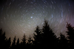North Star. Long exposure shot (44 min) of the North Star over trees in the Gifford Pinchot National Forest Royalty Free Stock Photography