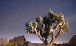 North Star Trails Long Exposure Astronomy Joshua Tree Night Sky Royalty Free Stock Photos