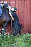 North Swedish Horse with girl stock photo