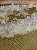 North sweet honey frame stock photo