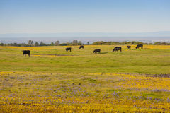 North Table Mountain Ecological Reserve, Oroville, California Royalty Free Stock Image