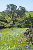 North Table Mountain Ecological Reserve, Oroville, California Royalty Free Stock Photos