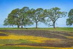 North Table Mountain Ecological Reserve, Oroville, California Royalty Free Stock Photo