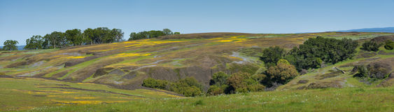 North Table Mountain Ecological Reserve, Oroville, California Royalty Free Stock Photography