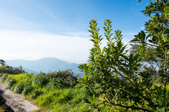 In the north of Thailand . The winter scenery in the north of Thailand Royalty Free Stock Photos