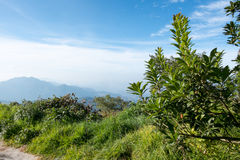 In the north of Thailand . The winter scenery in the north of Thailand Royalty Free Stock Image