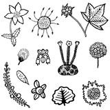 North tundra plant element collection Royalty Free Stock Photo