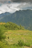 North Vietnam Landscape Royalty Free Stock Photography