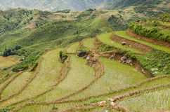 North Vietnam Landscape Stock Photography