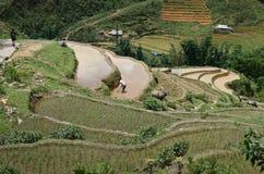 North Vietnam Landscape Royalty Free Stock Image