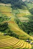 North VietNam. Mu cang chai provider ,Lao Cai , Viet Nam Royalty Free Stock Photo