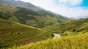 North VietNam. Mu cang chai provider ,Lao Cai  ,  Viet Nam Royalty Free Stock Photos