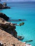 North-west coast of Socotra Island, Yemen. Horizontally growing cucumber tree, north-west coast of Socotra Island, Yemen Royalty Free Stock Image