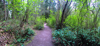 North West Hiking Trail through forest, Wide Panoramic Stock Photography