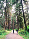 North West Hiking Trail Spring 2014. Two Hikers heading out on Hiking Trail to Carbon River Glacier, Washington State, USA, 2014 Stock Image