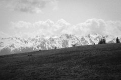 North West Mountain Range with Deer, B/W Royalty Free Stock Photography