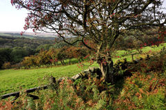 North Yorkshire amarra Inglaterra Imagens de Stock Royalty Free