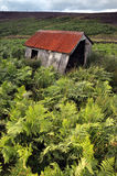 North Yorkshire cumuje i zielona paproć Fotografia Stock