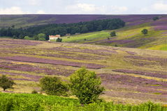North Yorkshire Moors Stock Photography