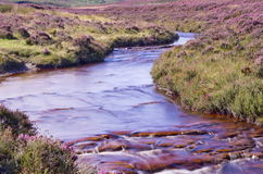 North Yorkshire Moors Royalty Free Stock Image