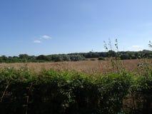 Northamptonshire anglais de ruelle de pays de haie de Saxon Photos libres de droits