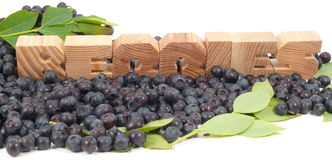 Northblue blueberry stock illustration