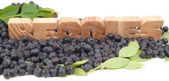 northblue blueberry ilustracji