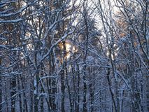 Northeast Snow Overnight