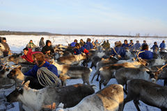 Northern aboriginals. Russia. Yamal. Nadym. Stock Image