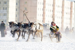 Northern aboriginals. Russia. Yamal. Nadym. Royalty Free Stock Photography