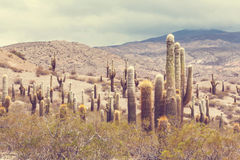 Northern Argentina. Scenic landscapes of Northern Argentina Stock Images