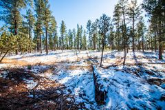 Northern Arizona Snow Covered Mountain stock photography