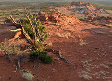 Northern Arizona Wilderness. Sweeping view of the wilderness area near south coyote buttes in northern Arizona Stock Photography