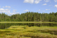 Northern bog. Northern Finland, Lapland royalty free stock photography