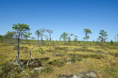 Northern bog Stock Images