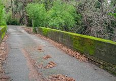 Moss covered rural bridge. Northern California bridge is covered with moss stock images