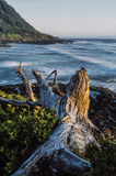 Northern California coast Royalty Free Stock Photography
