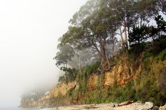 Northern California coastline. Under fog royalty free stock photos