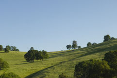 Northern California green rolling hills Stock Photography