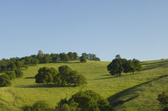 Northern California green rolling hills Royalty Free Stock Photography